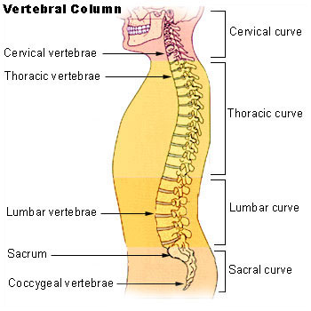 Anatomía de la espalda y como cuidarla | Natufisio